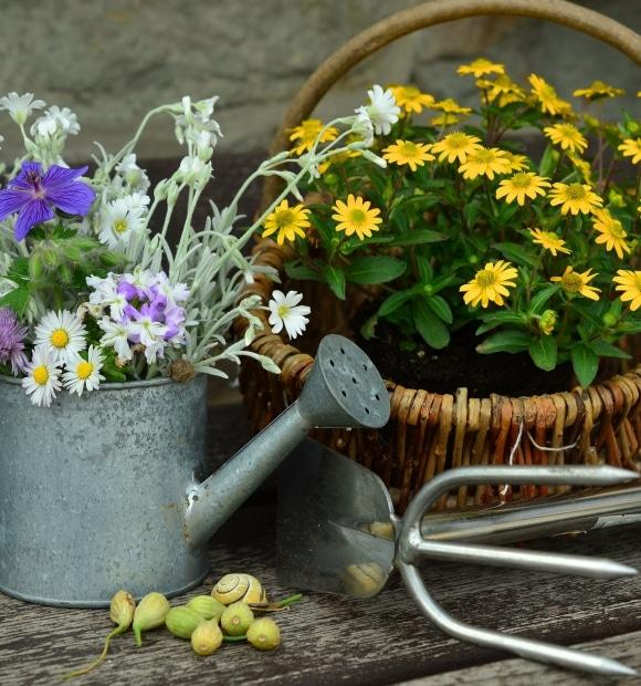 """Urban Gardening"""